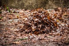 Dead leaves pile Stock Photos