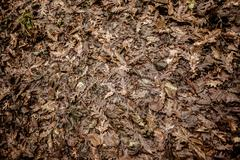 dead leaves - stock photo