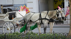 Two beautiful horses harnessed to a carriage standing on the street Stock Footage