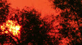 Rising of the red sun.  NTSC  Timelapse HD Footage