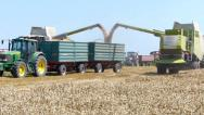 Stock Video Footage of Two combine unloading wheat grain