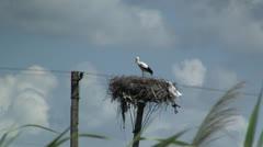Stork in nest Stock Footage