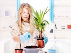 woman transplant plant at home - stock photo