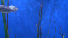 Aquarium, Fish Tank, Goldfish as Pets, 2D, 3D - stock footage