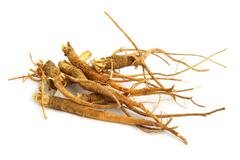 roots - stock photo
