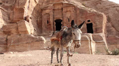 Grey donkey standing and chewing in front of ruins Stock Footage