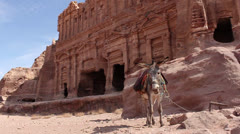 Grey donkey  in front of ruins waved his head and ears Stock Footage