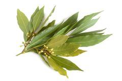 fresh bay leaves - stock photo