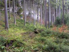 Stock Photo of bohemian paradise - forest