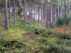 bohemian paradise - forest - stock photo