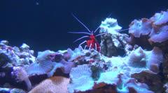 Shrimps, Prawns, Sea Creatures, 2D, 3D Stock Footage