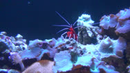 Stock Video Footage of Shrimps, Prawns, Sea Creatures, 2D, 3D