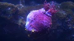 Sea Urchins, Sea Creatures, 2D, 3D - stock footage