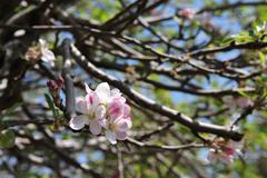 Almond tree orchard Stock Photos