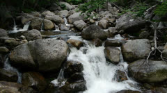 Forest Stream with Waterfalls Stock Footage