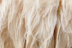 sheep fleece for texture background - stock photo