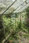 Neglected greenhouse Stock Photos