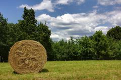 hay bale in a field - stock photo