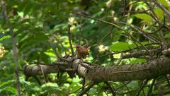 Bird in forest Stock Footage