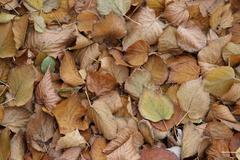 Fallen dead leaves - stock photo