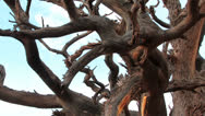 Stock Video Footage of Beautiful Dry Tree
