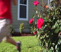 Child Running Past Rose Bush Stock Footage