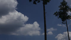 Lone Pine trees against cloudy blue sky, static @ 850% Stock Footage