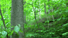 Forest wide angle pan Stock Footage