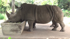 Rhino, Rhinoceros, Zoo Animals, 2D, 3D Stock Footage