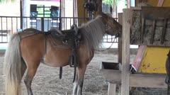 Pony Eating Hay, Horses, Farm Animals, 2D, 3D Stock Footage