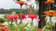 Butterfly point Stock Footage