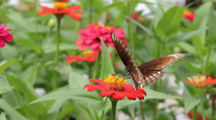 Butterfly back point Stock Footage
