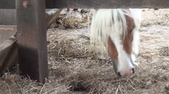 Horse Eating Hay, Grazing, Farm Animals, 2D, 3D Stock Footage