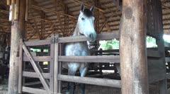 Horses, Farm Animals, Equine, 2D, 3D Stock Footage