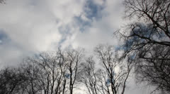Trees blowing in gale Stock Footage