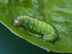 Baby larva. Stock Photos