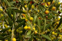 olives - stock photo