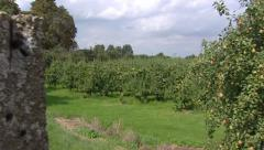 Dutch River dike + pan pear orchard in full fruit Stock Footage