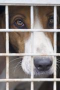 Dog cage Stock Photos