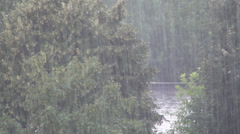 Storm, Torrential Summer Rain in Forest, Wood, Foliage, Rainy, Stormy Windy Day Stock Footage
