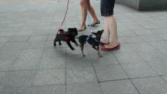 Puppies at feet of their owners Stock Footage
