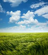 Greed wheat field and blue sky with clouds Stock Photos
