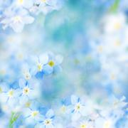 fantasy gentle floral background / blue flowers defocused - stock photo