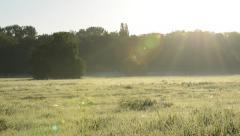 Sunny Field Stock Footage