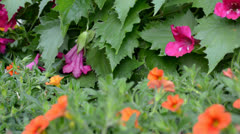Pour of summer flowers Stock Footage