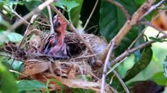 Baby birds Stock Footage