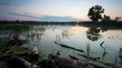 Timelapse landscape with sunrise over Misty Swamp Stock Footage