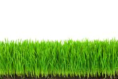 green  grass with fertile soil and drops dew - stock photo