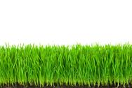 Green  grass with fertile soil and drops dew Stock Photos