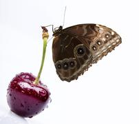 Sweet cherry and butterfly macro background Stock Photos